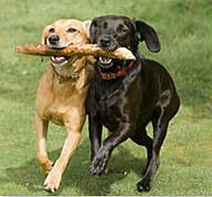 Cooperating dogs