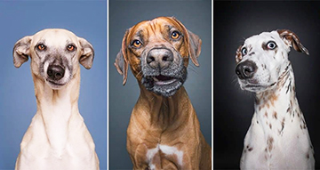 Sceptical dogs