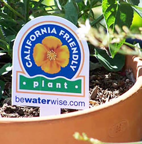 case branding study for California Friendly